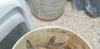 Une partie de la nourriture avariée saisie. Source Photo: Facebook