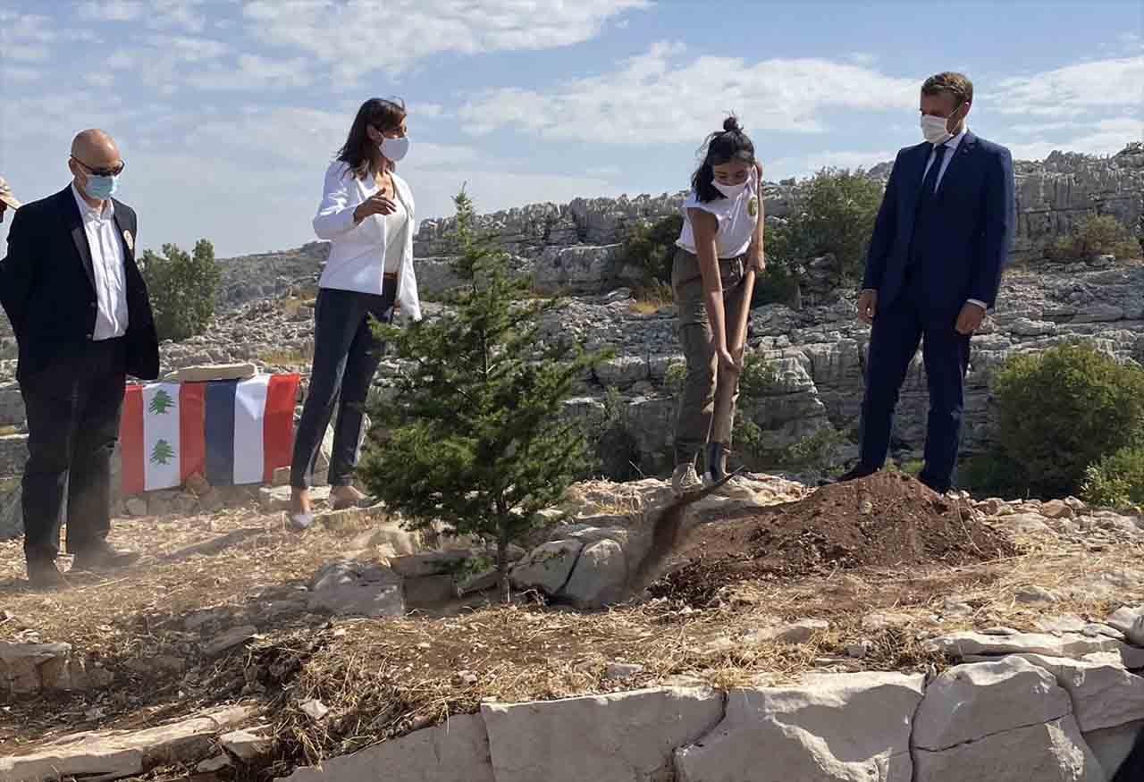 Emmanuel Macron Qui Plante Un Cèdre À Jaja, Le 1Er Septembre 2020 À L'Occasion Du 100Ème Anniversaire Du Grand Liban